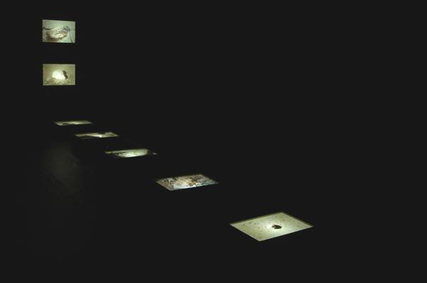 Cajas de luz. Medidas variables. 2007.